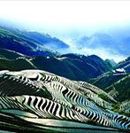 Longji Rice Terraces spring