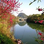 Peach blossom river in Spring