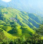 longji rice terraces in summer