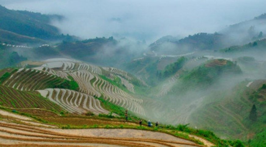 Jinkeng Rice Terraces (500 x 360)