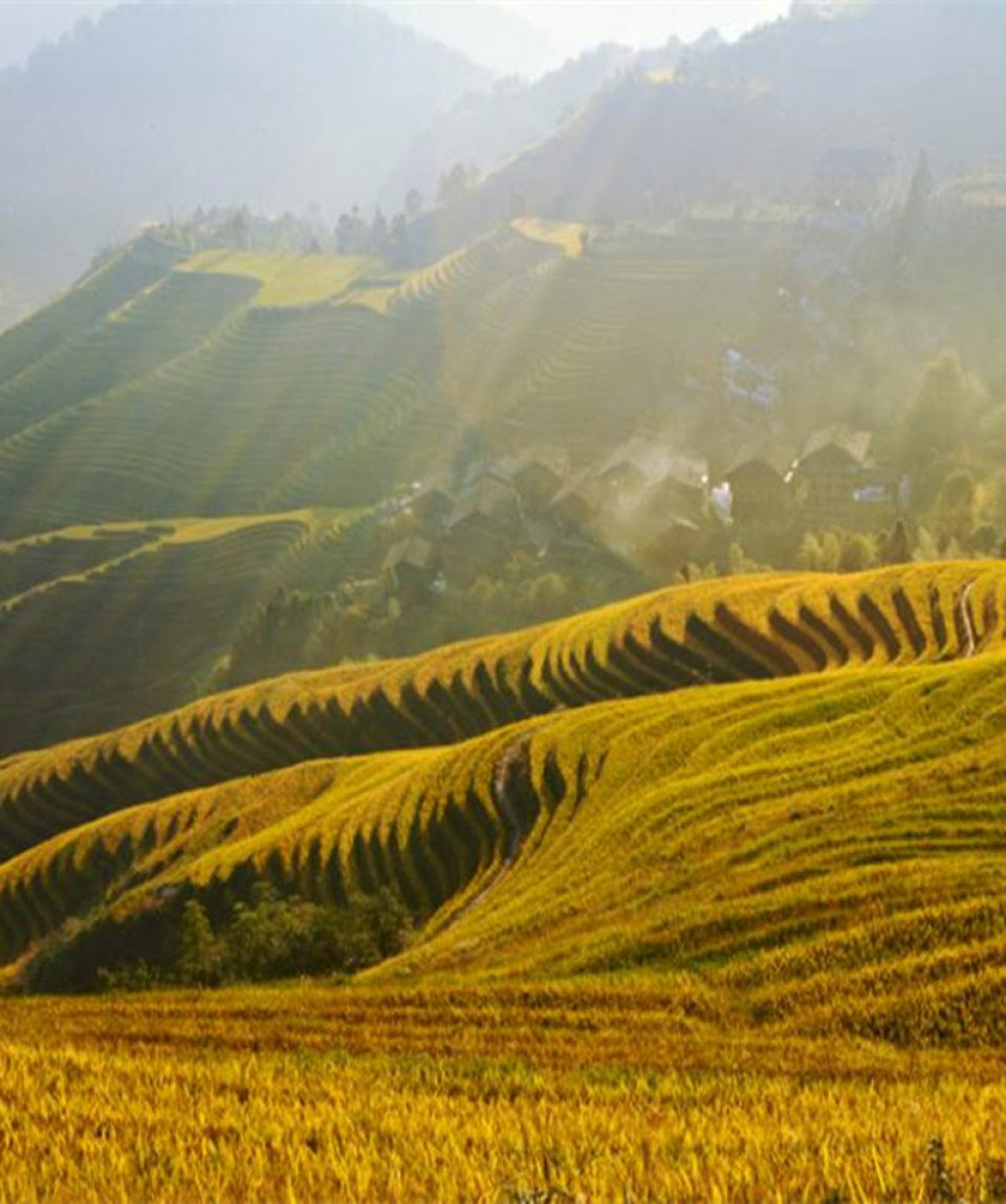 Longji Rice Terraces (900 x 950)