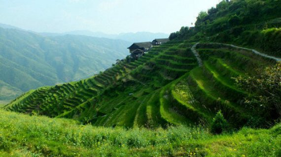 Rice Terraces Hiking (500 x 360)