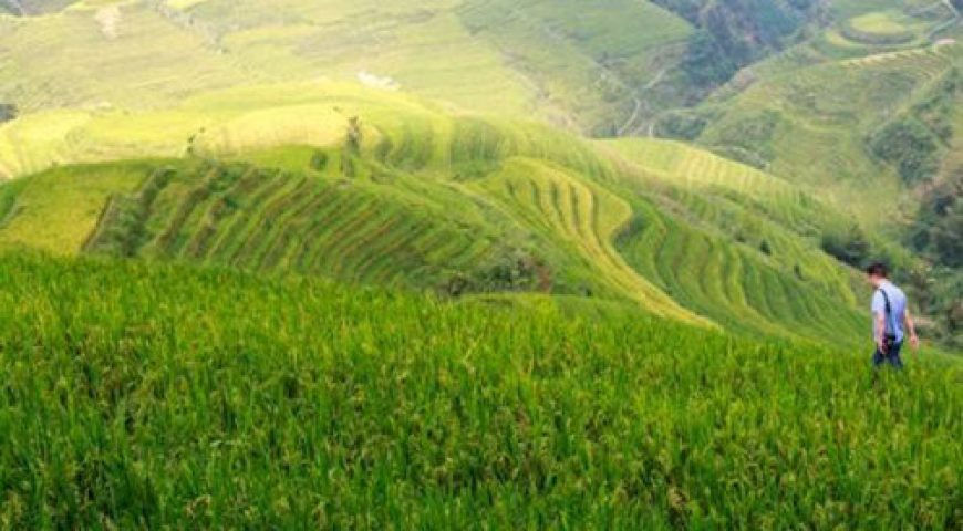 Rice Terraces Hiking (500 x 500)