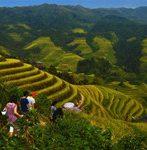 longji rice terraces hiking